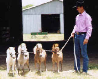 dent family miniature horse ranch miniature horses for sale miniature horse 322x259